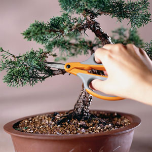 Bonsai your product